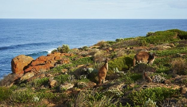 Discover the Unfamiliar Australian Coast of Margaret River